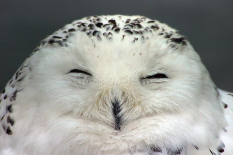 猫头鹰雪 库存照片