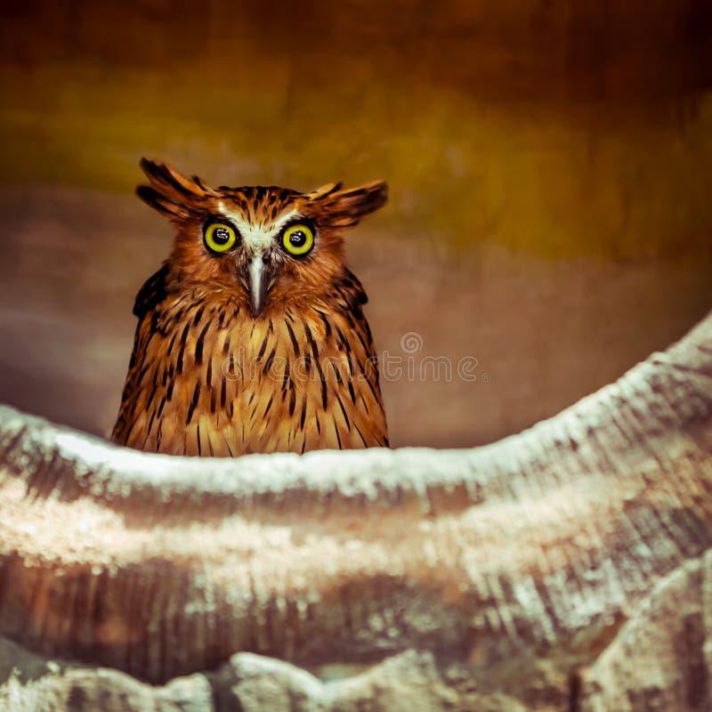 猫头鹰 库存图片