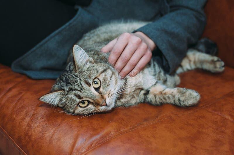 猫女孩抚摸 免版税库存图片