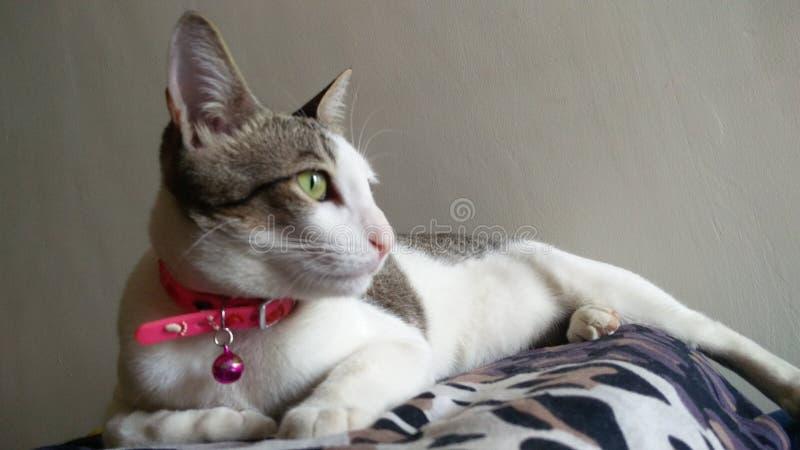 猫姿势 免版税库存照片