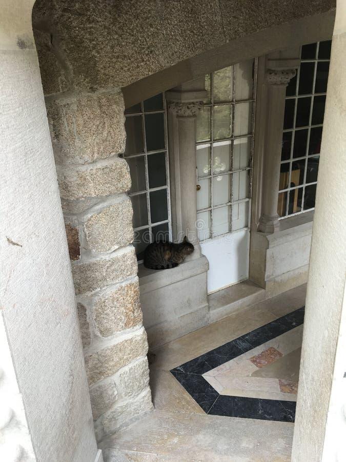 猫安装在王宫里面在辛特拉葡萄牙 库存照片