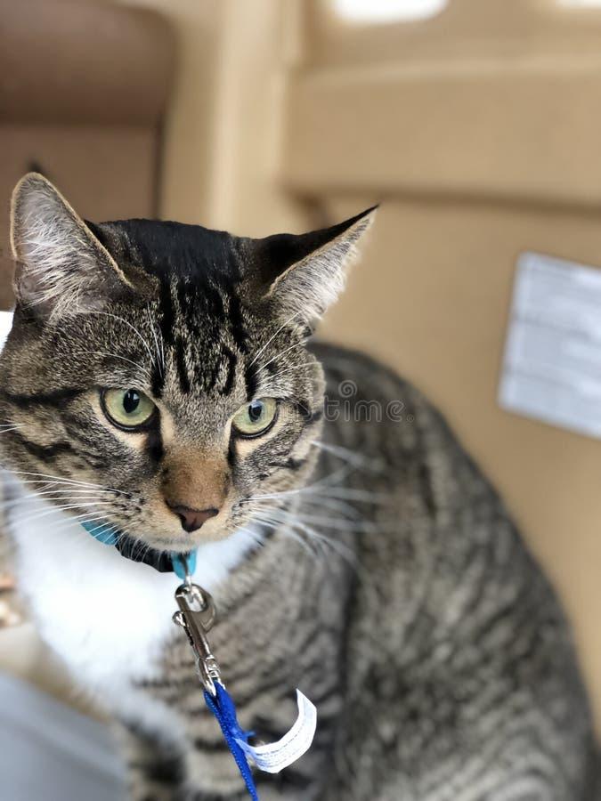 猫室外经验 免版税库存图片