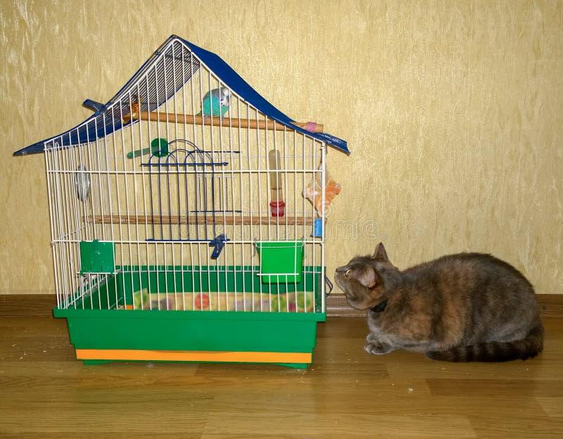 猫寻找一只鹦鹉 库存图片