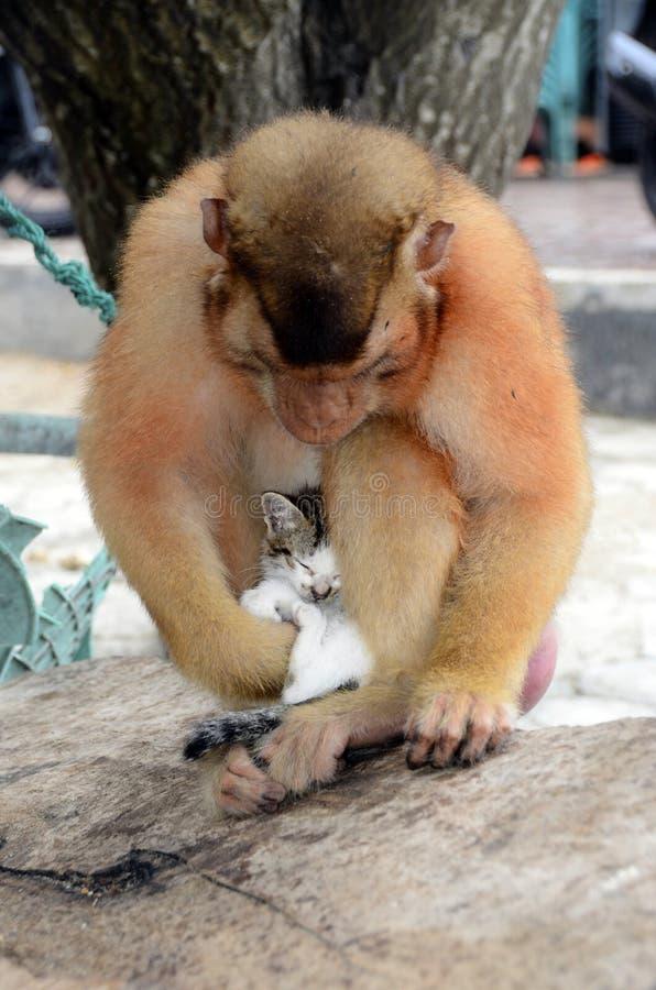 猫小猫和猴子 免版税库存图片