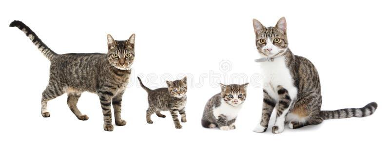 猫小猫 免版税库存照片