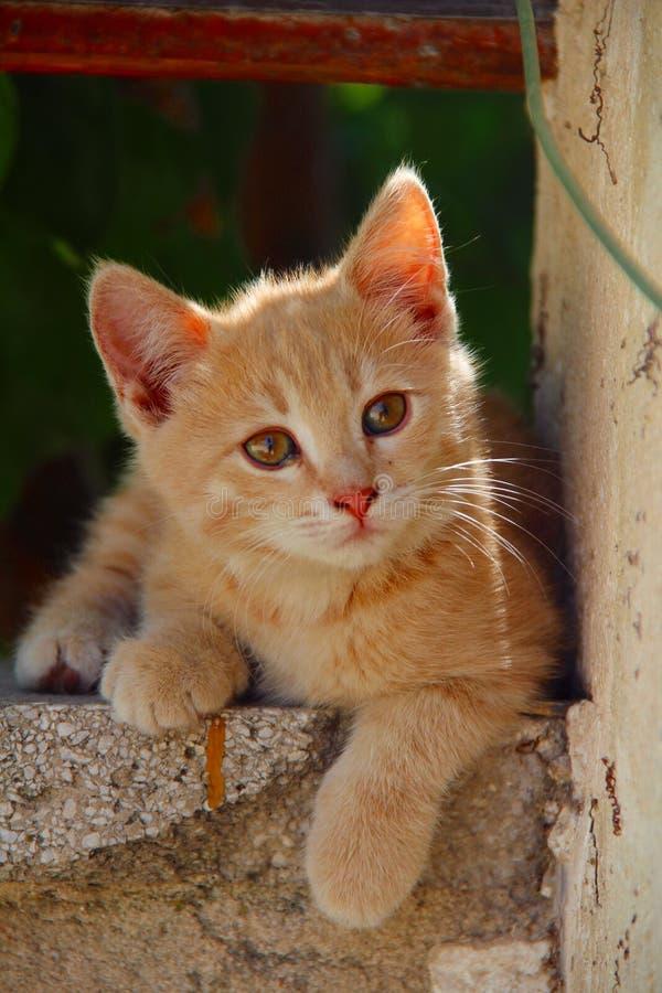 猫少许纵向 库存照片