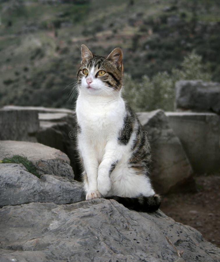 猫希腊迷路者 免版税库存照片