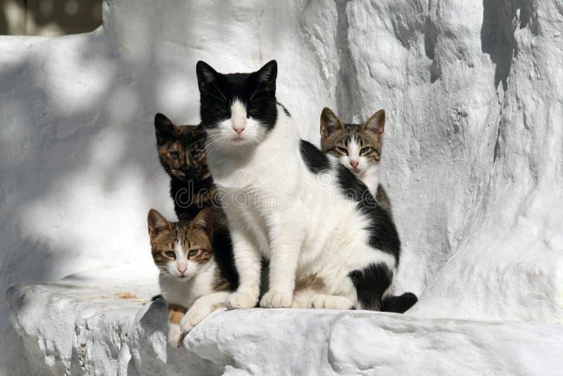 猫希腊 免版税库存照片