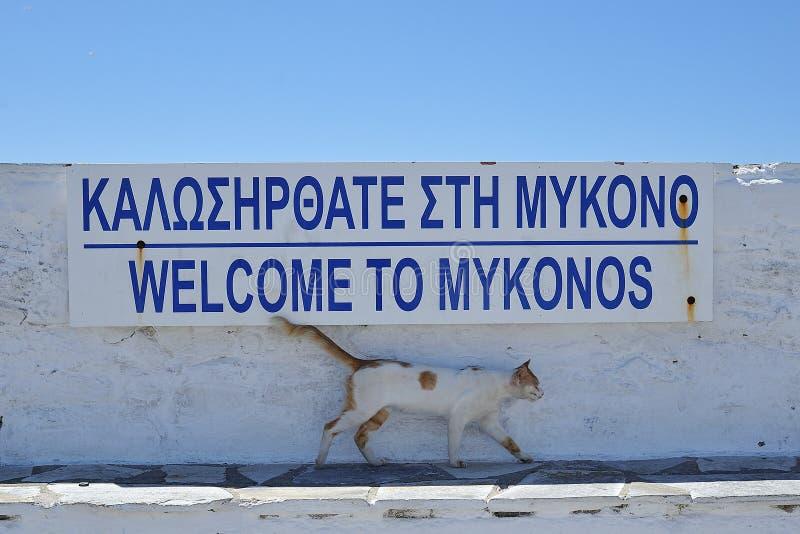 猫希腊 库存照片
