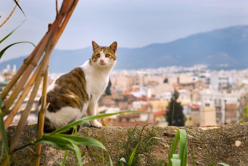 猫希腊 库存图片