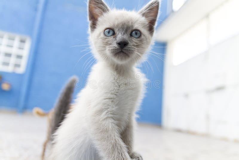 猫带在房子里 图库摄影