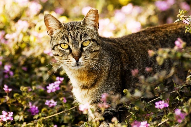 猫庭院 库存图片