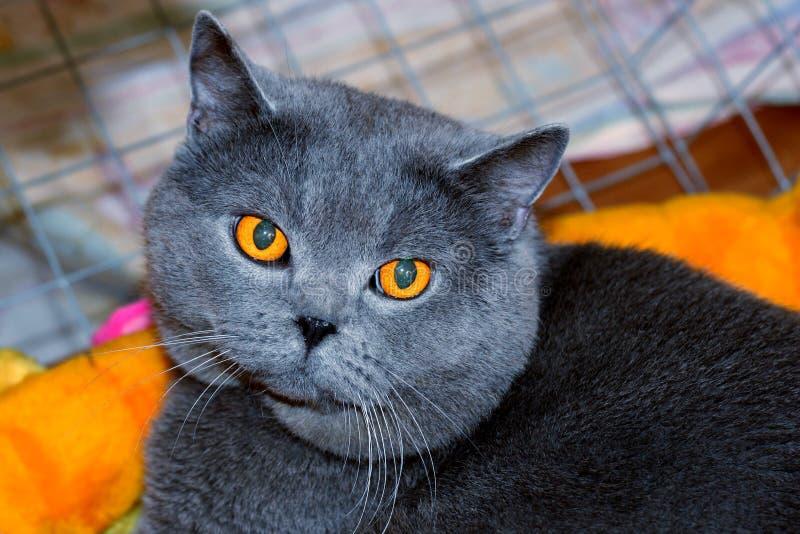 猫彻斯特 免版税图库摄影