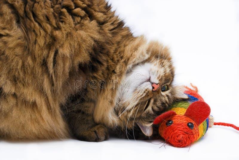 猫愉快的liyng鼠标在旁边 免版税库存图片
