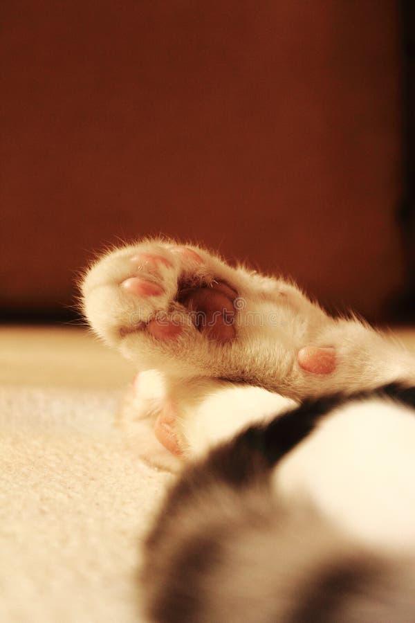 猫懒惰爪子 免版税库存照片