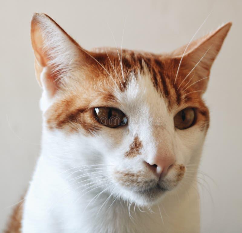 猫我恼怒一点的位 库存照片