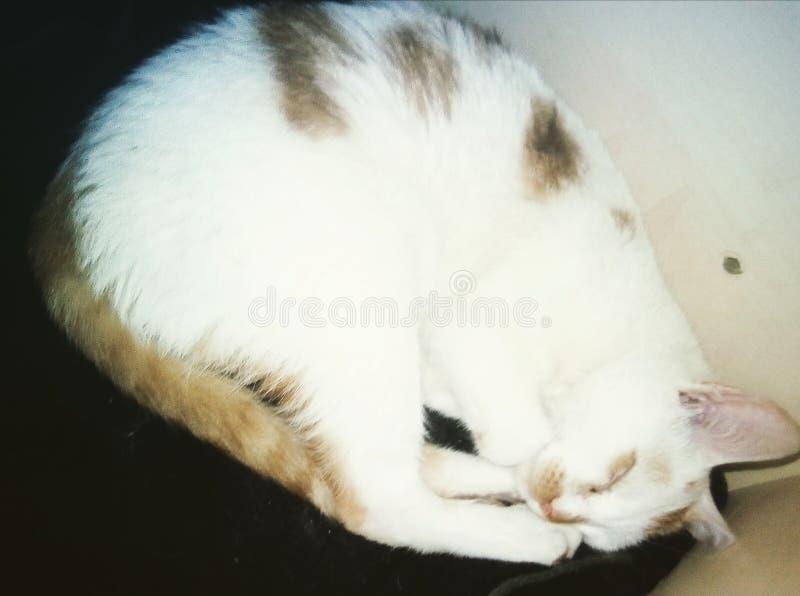 猫我的一点 免版税图库摄影