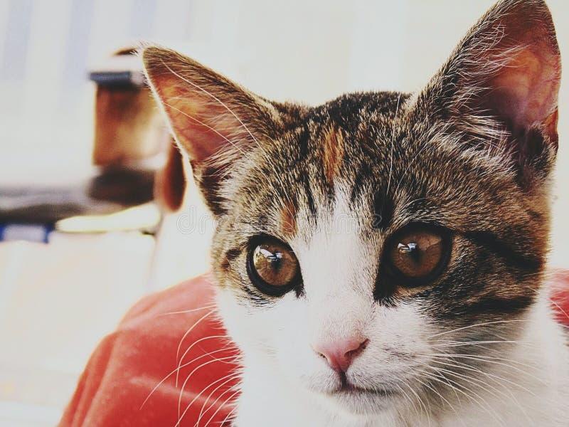 猫我的一点 图库摄影