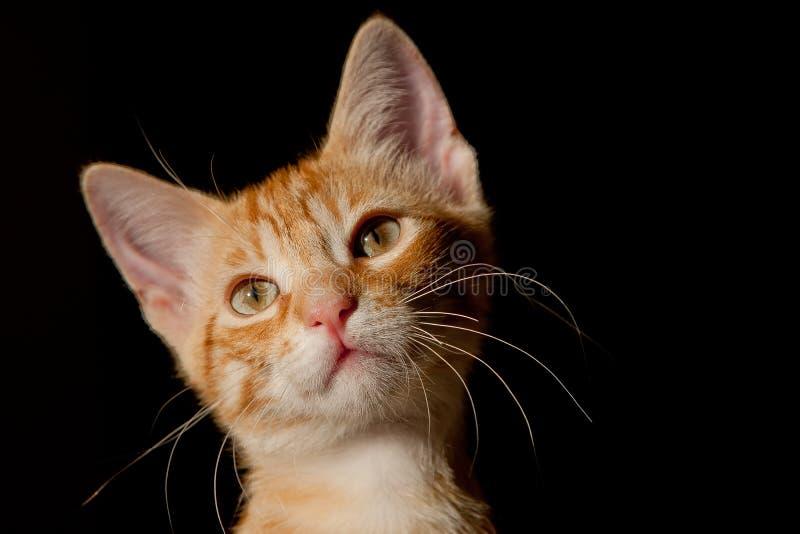 猫我 免版税库存图片