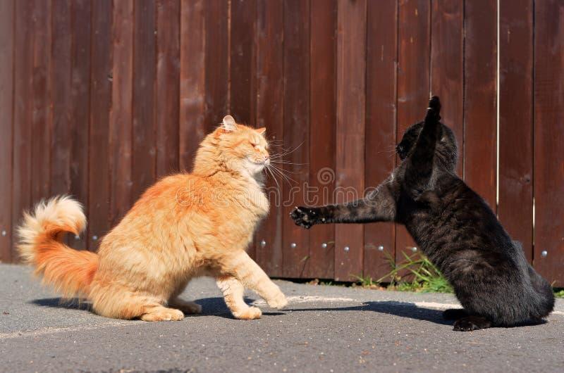 猫战斗 库存图片