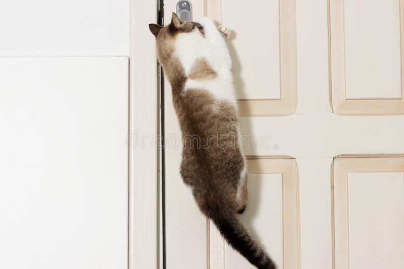猫打开门 免版税图库摄影