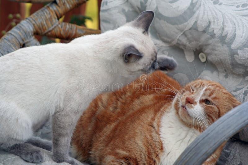 猫报废 免版税库存图片