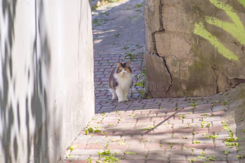 猫捉住了一只蜥蜴 猫世界  小猫和蜥蜴 小猫是掠食性动物 猎人,与牺牲者的猎人 图库摄影