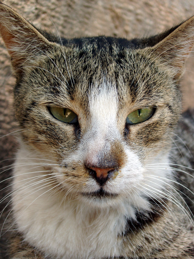 猫接近的迷路者 库存图片