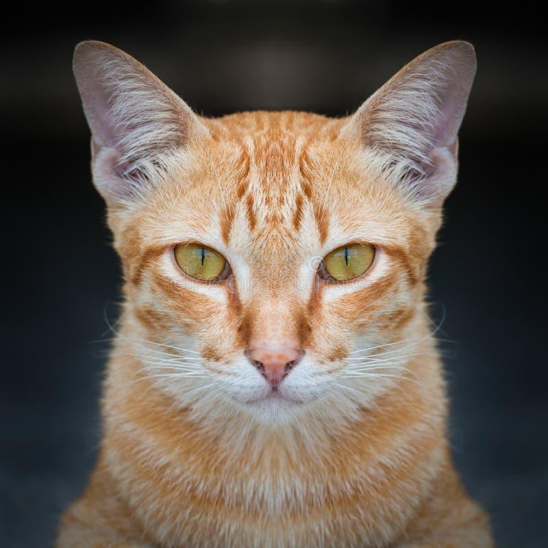 猫接近面朝上 图库摄影