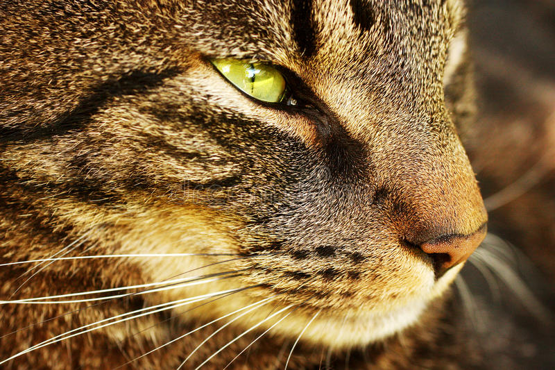 猫接近  库存图片