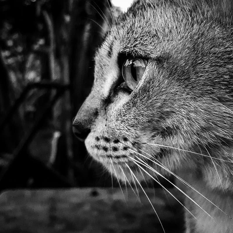 猫放松 免版税库存图片