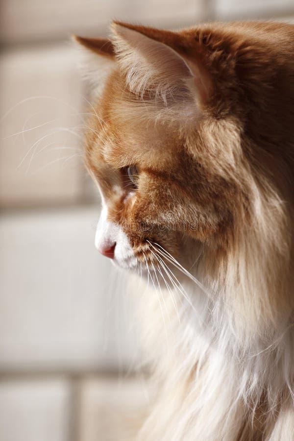 猫斟酌 库存照片