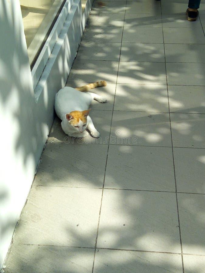 猫断裂 免版税库存照片