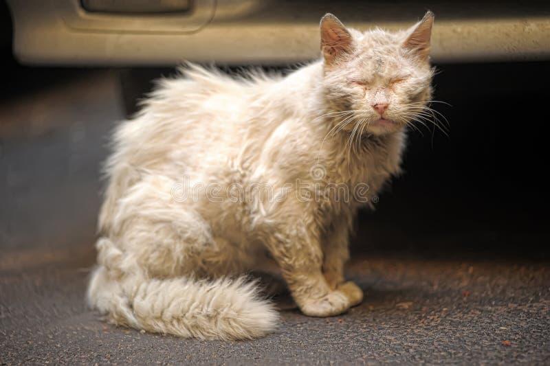 猫无家可归的白色 免版税库存图片