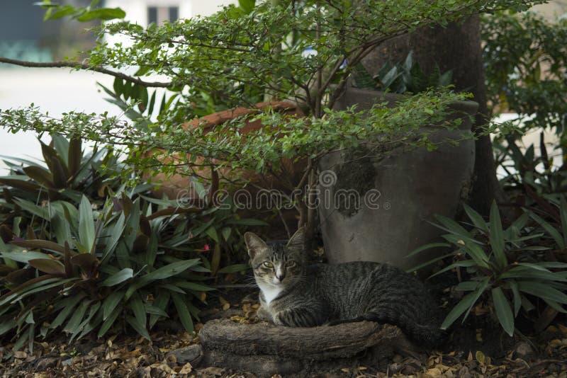 猫是休息在树下 库存照片