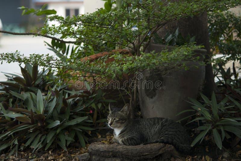 猫是休息在树下 免版税库存图片