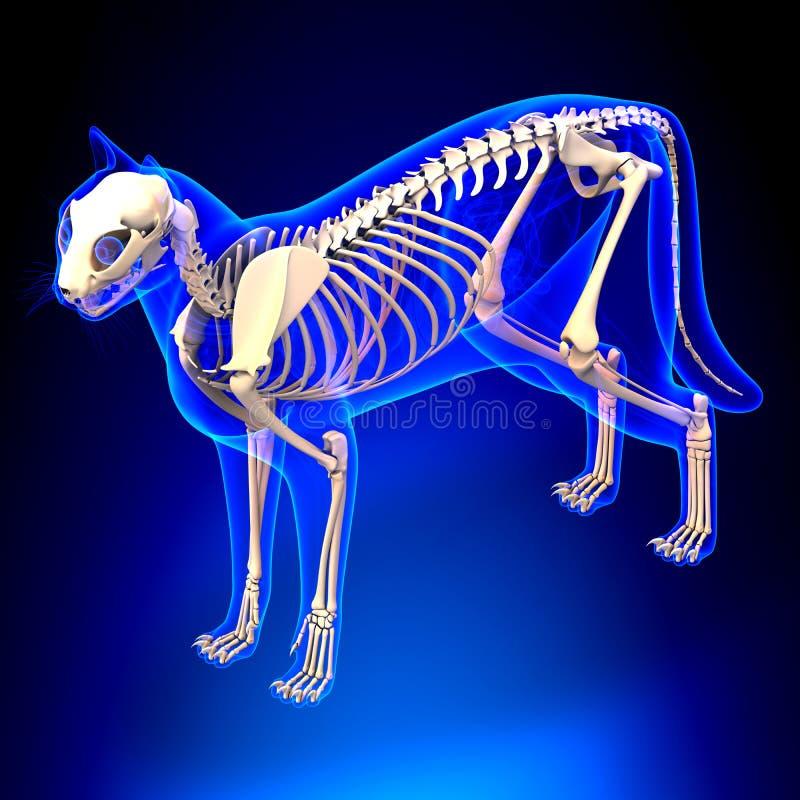 猫最基本的解剖学-猫骨骼的解剖学-透视v 库存照片