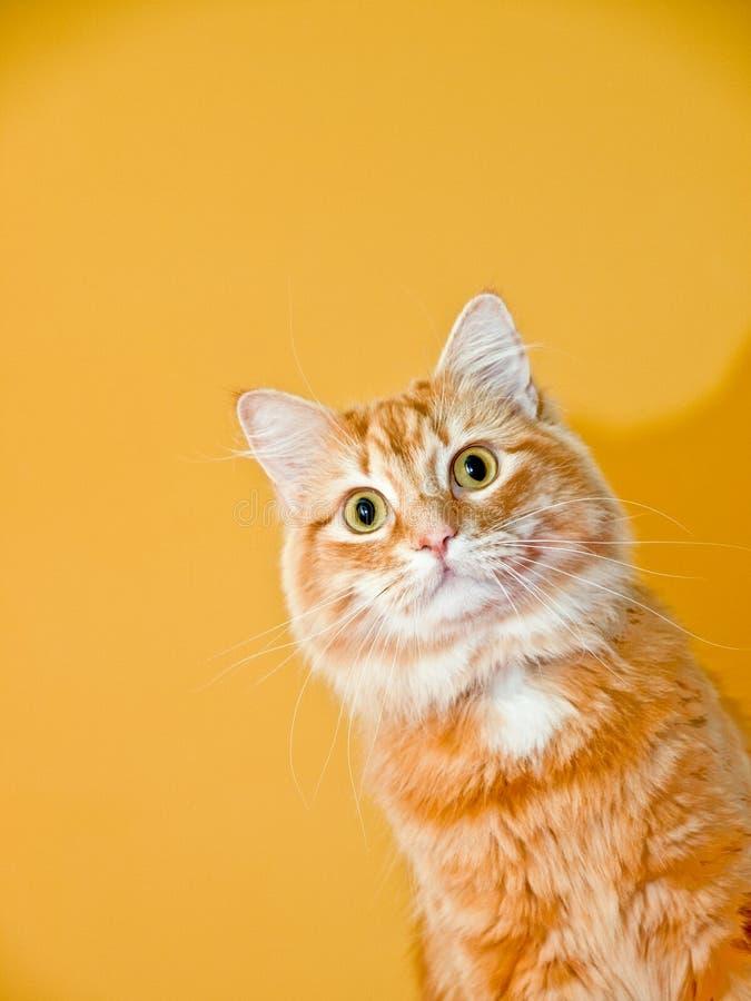 猫木偶 库存照片
