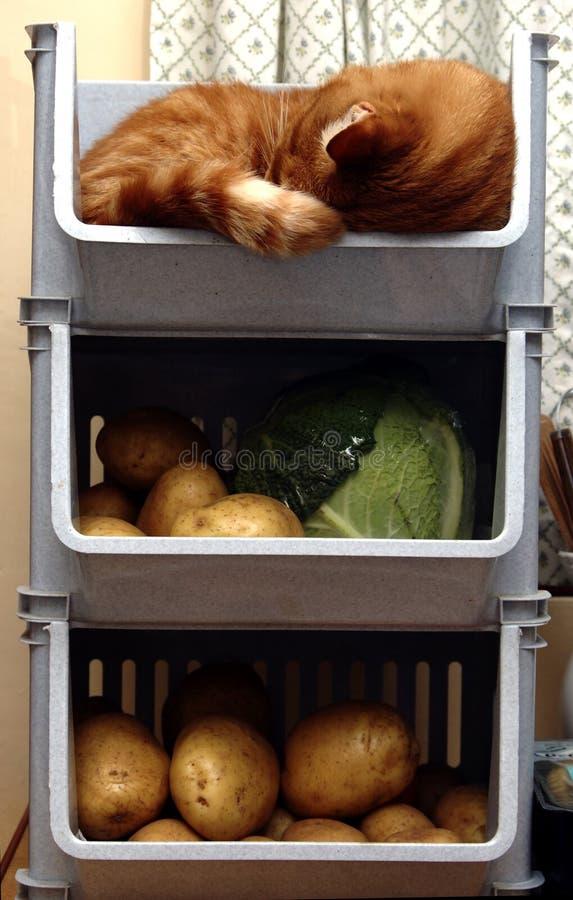 猫机架蔬菜 免版税库存照片