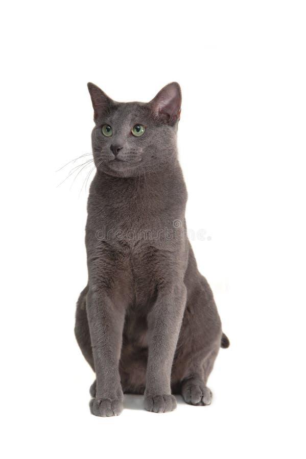 猫查出的白色 免版税库存照片