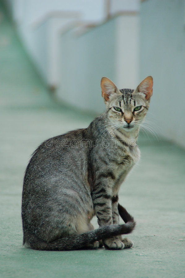 猫查找 库存照片