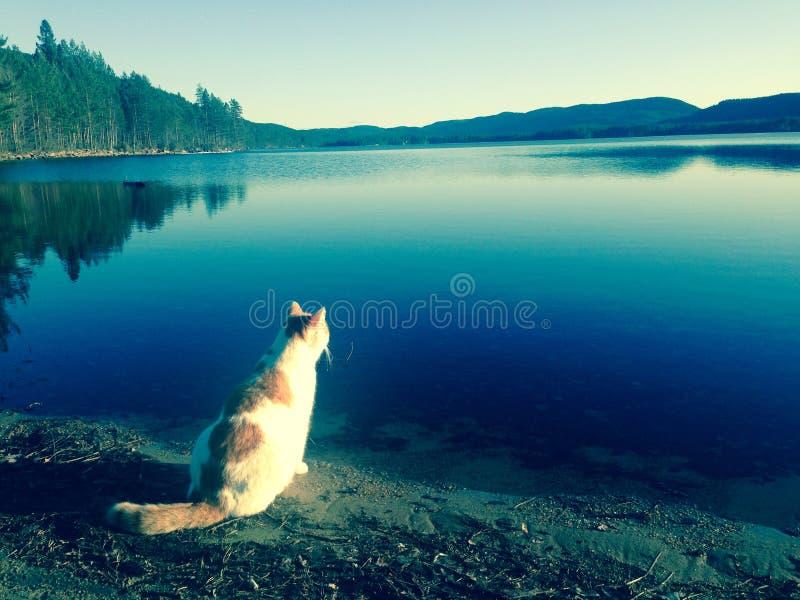 猫梦想 库存图片