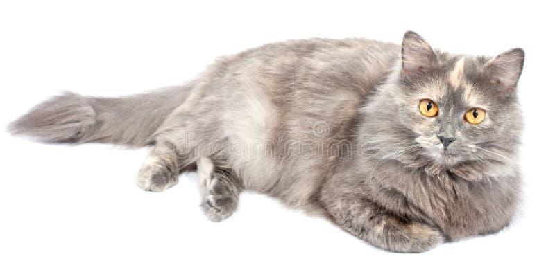猫森林挪威 免版税库存图片