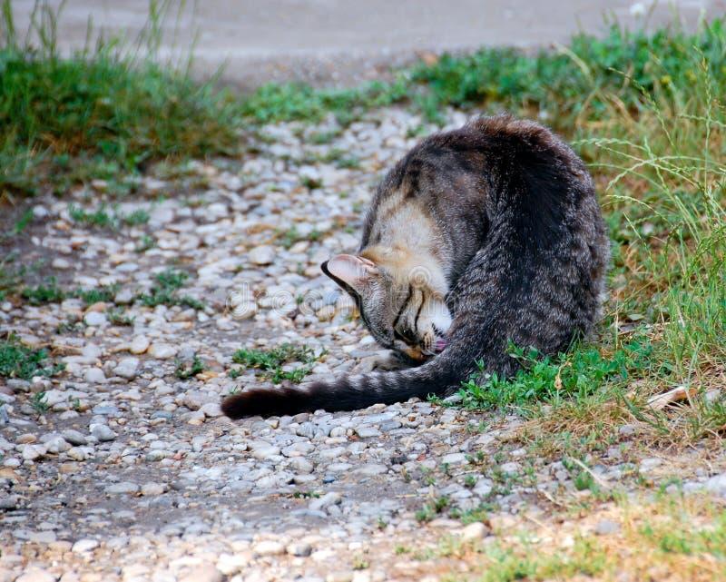 猫洗涤物 免版税图库摄影