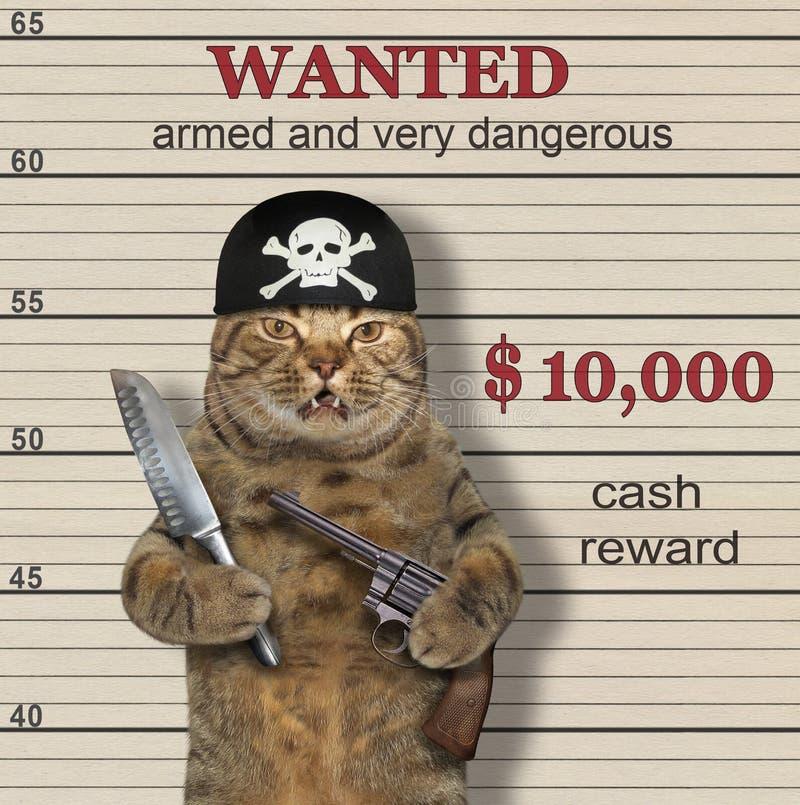 在海盗班丹纳花绸的猫拿着一杆枪和一把刀子 他被要 奶油被装载的饼干
