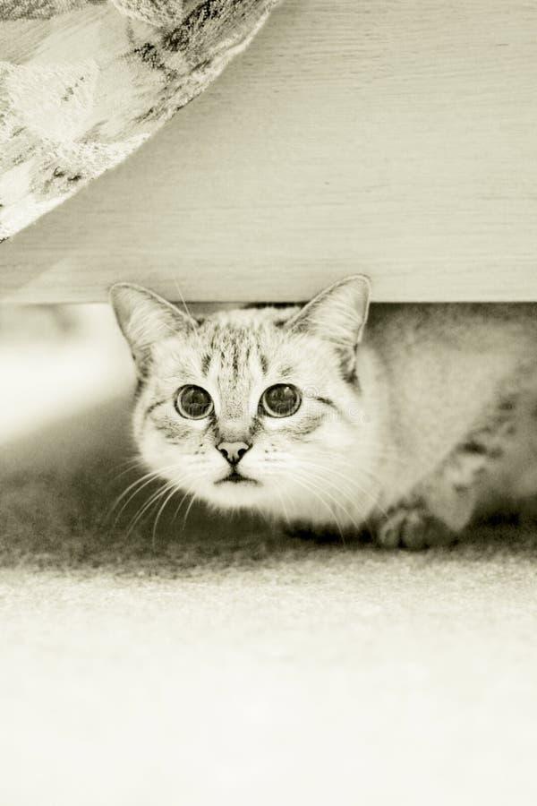 猫淘气 免版税库存图片