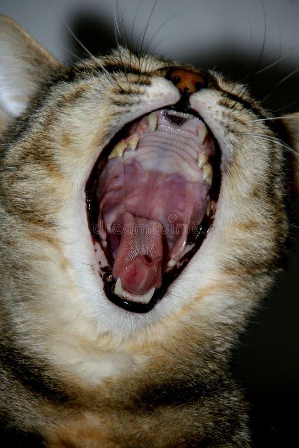 猫深度域嘴自然开放portraif浅视图年轻人 浅景深自然看法的 免版税图库摄影