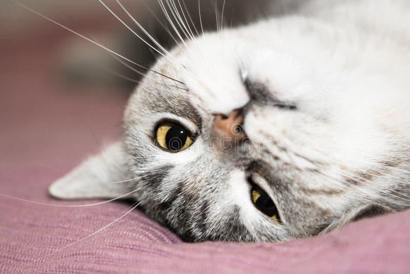 猫灰色其它 库存照片
