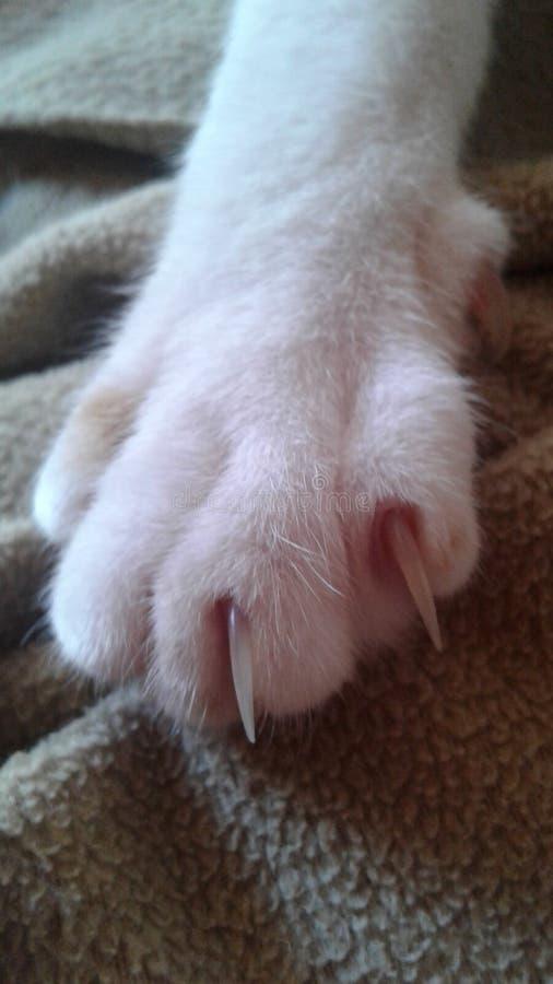 猫爪 库存照片