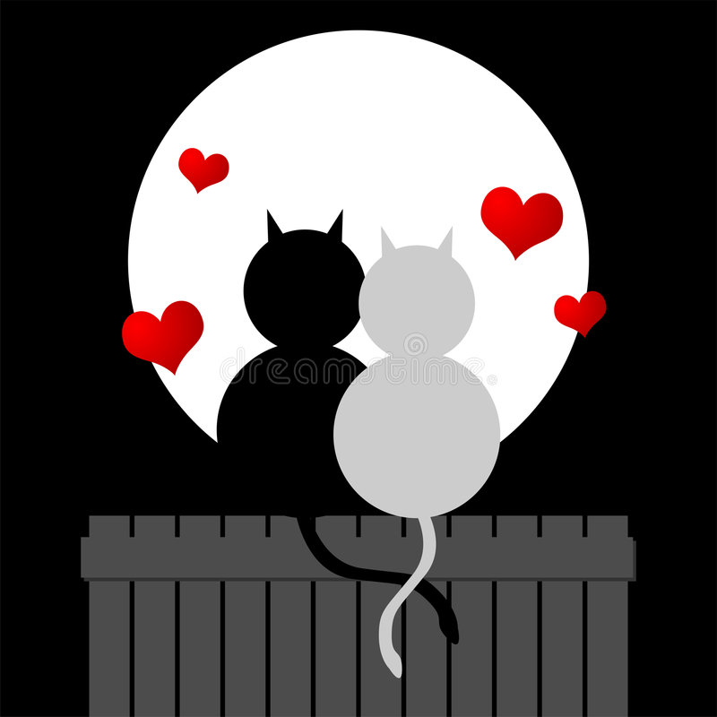 猫爱 库存例证